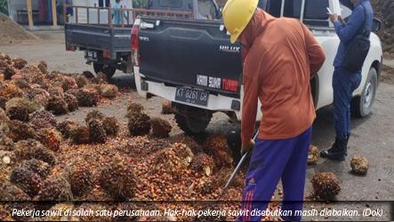 FHUKATAN-KSBSI:Pertumbuhan Sawit Tidak Seiring Dengan Peningkatan Kesejahteraan Buruh